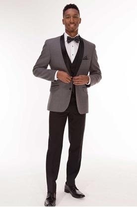 Smoke Grey Tuxedo